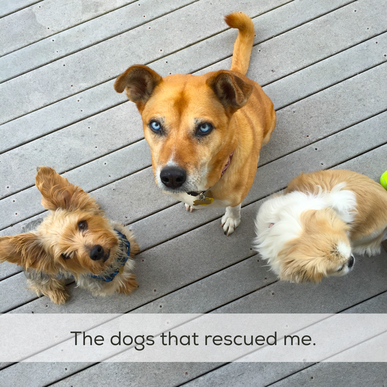 My three dogs.