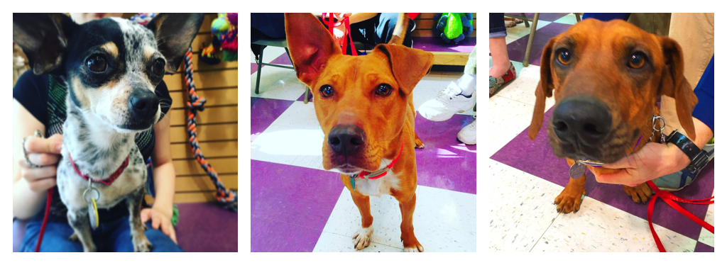 Here are just a few of the shelter dogs that I featured on Instagram. All were adopted!