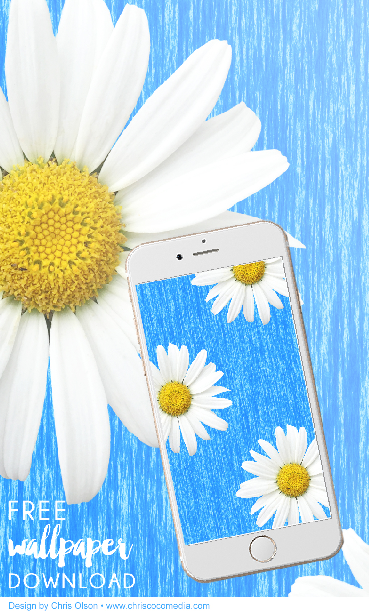 Daisy wallpaper for your phone by Chris Olson.jpg