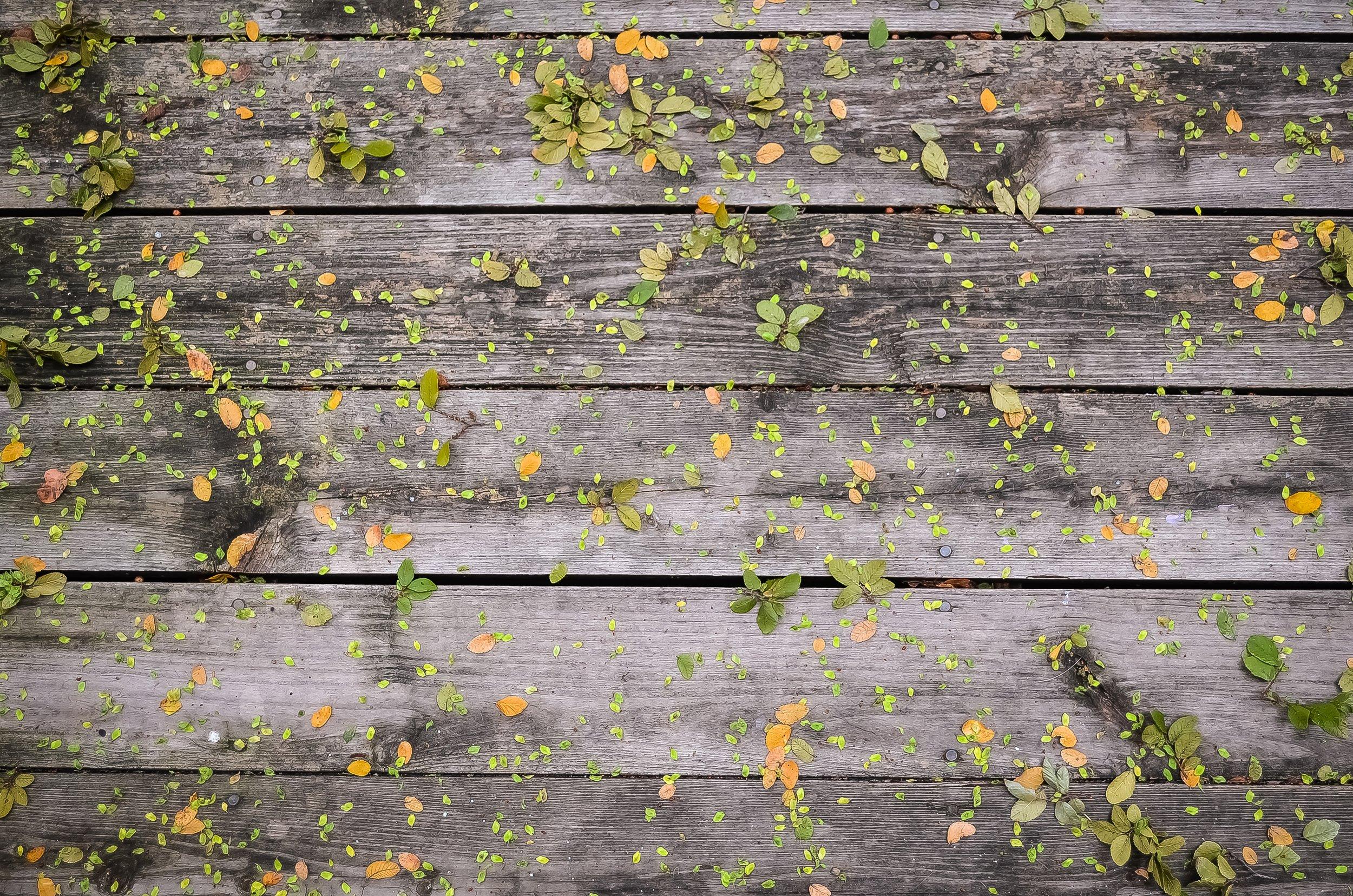 Leaves-Steve Richey.JPG