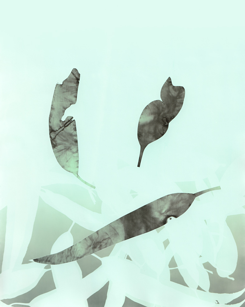 Breathing with Trees #3 , 2013 solarised silver gelatin print (photogram) with toner 25.4 x 20.3 cm