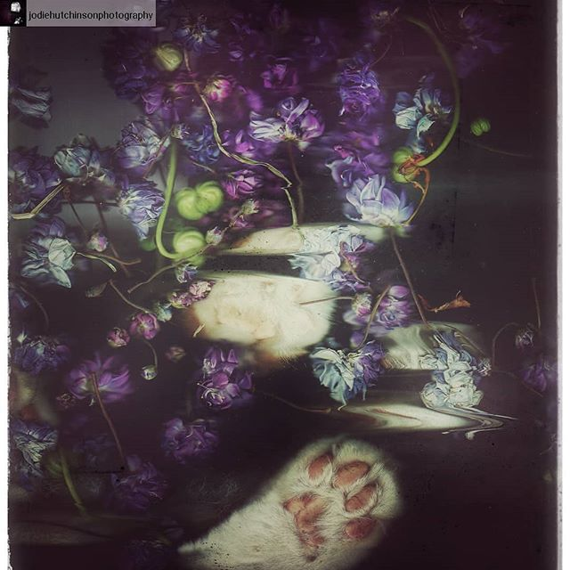 #Repost from @jodiehutchinsonphotography with @regram.app ... Excellent experimental cameraless photography workshop at @ccp_australia. This scanography work is by workshop participant Jodie Hutchison. No we didn't have a cat at the gallery, this was created after the workshop! Wonderful to see work continued to be created already. Thank you to everyone who attended and contributed to a day of insightful discussions and the creations of new work. ✨✨ #scanography #cameraless #experimentalphotography