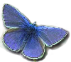 small blue.png