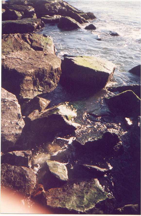 Long Beach Rocks.jpg