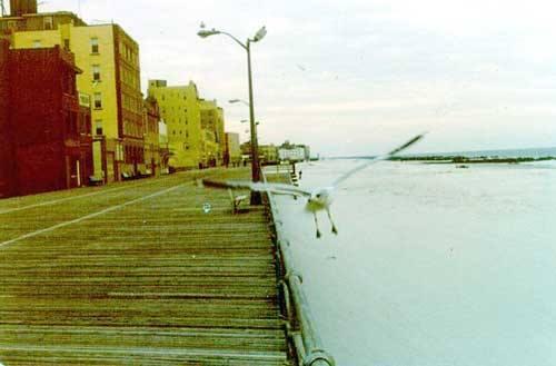 Boardwalk Seagull