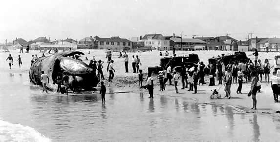 West End Beach Whale 1972 Bari Greenspan.jpg