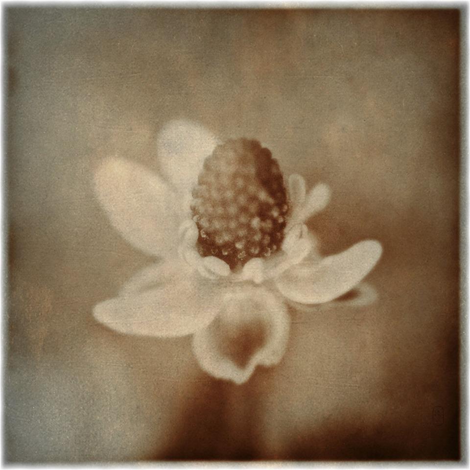Fleur Schim