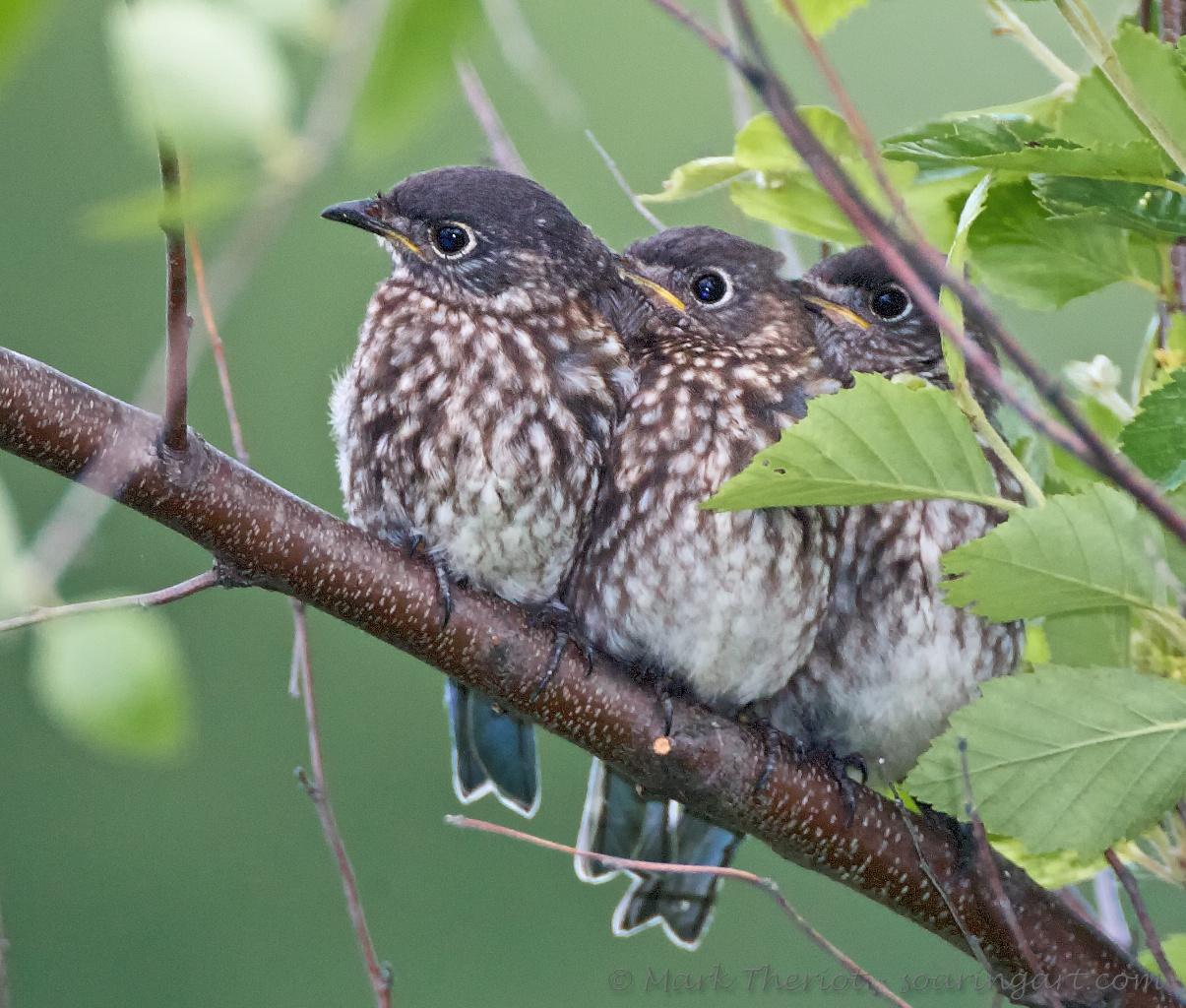Bluebird Brothers.jpg