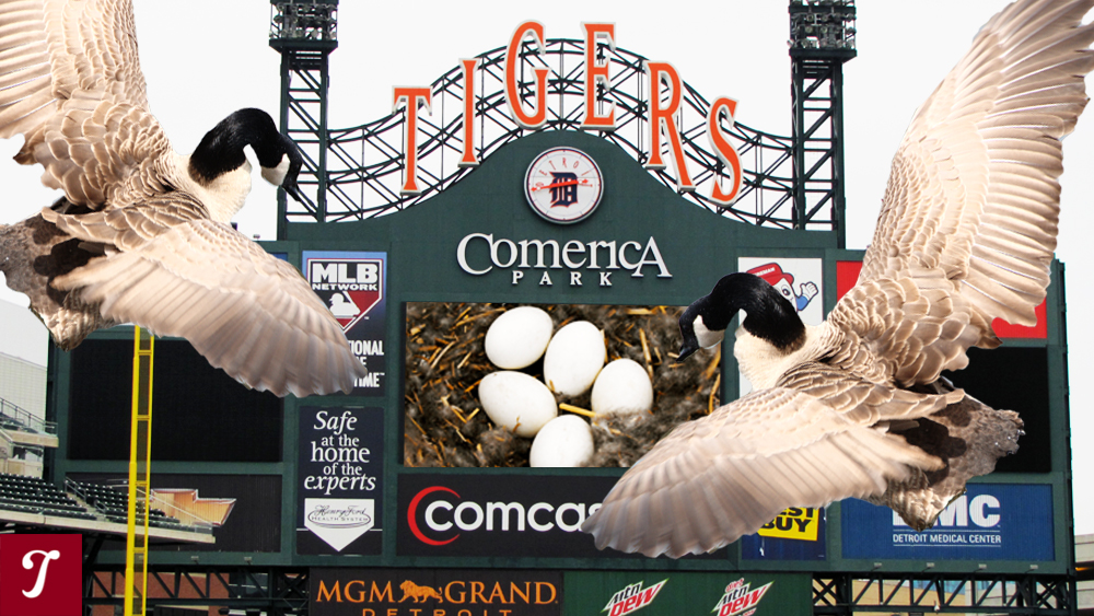 """Kill that goose!"" A brief history of baseball fair and fowl"
