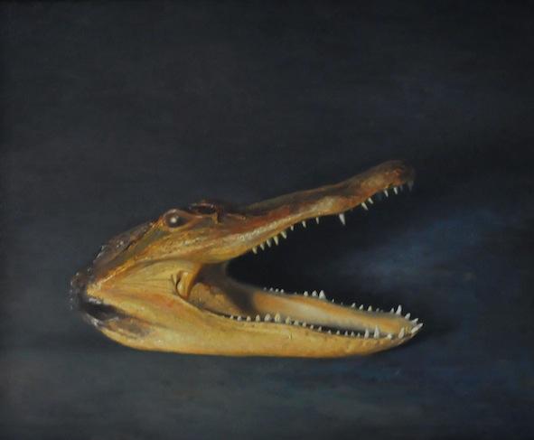 American Alligator Head