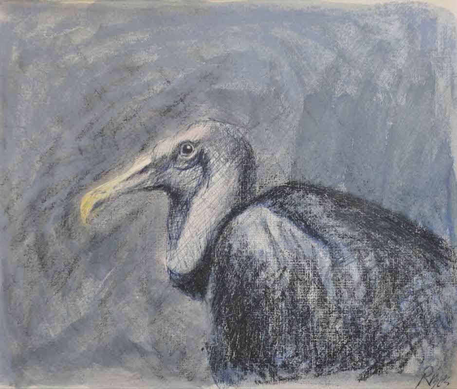 """Black Vulture   , Pastel, 8""""x 10"""""""