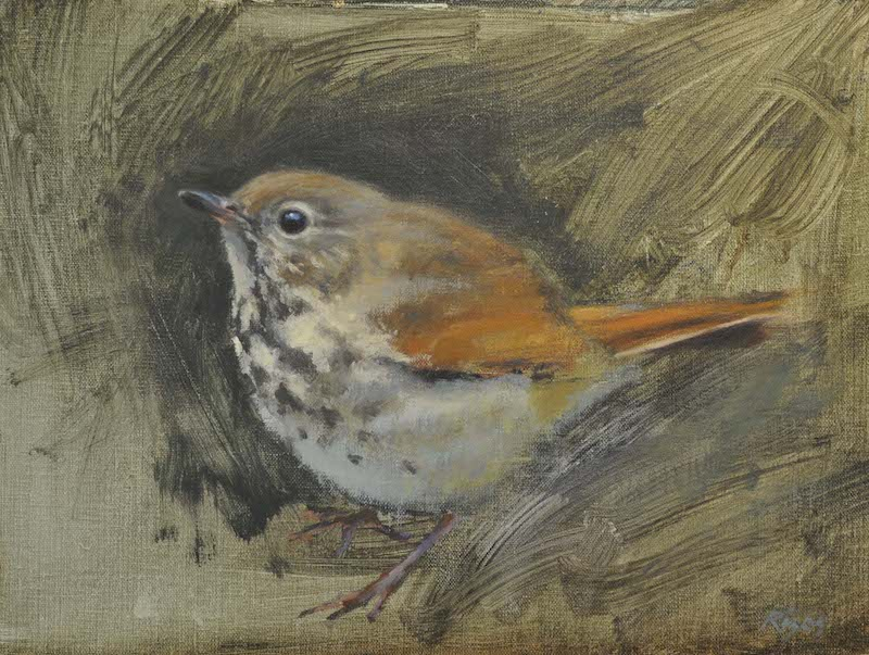 "Hermit Thrush,    Oil on Panel, 9""x 12"""