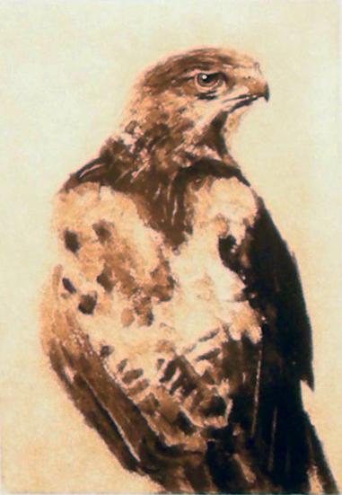 """Hawk,  Etching, 5""""x 7"""""""