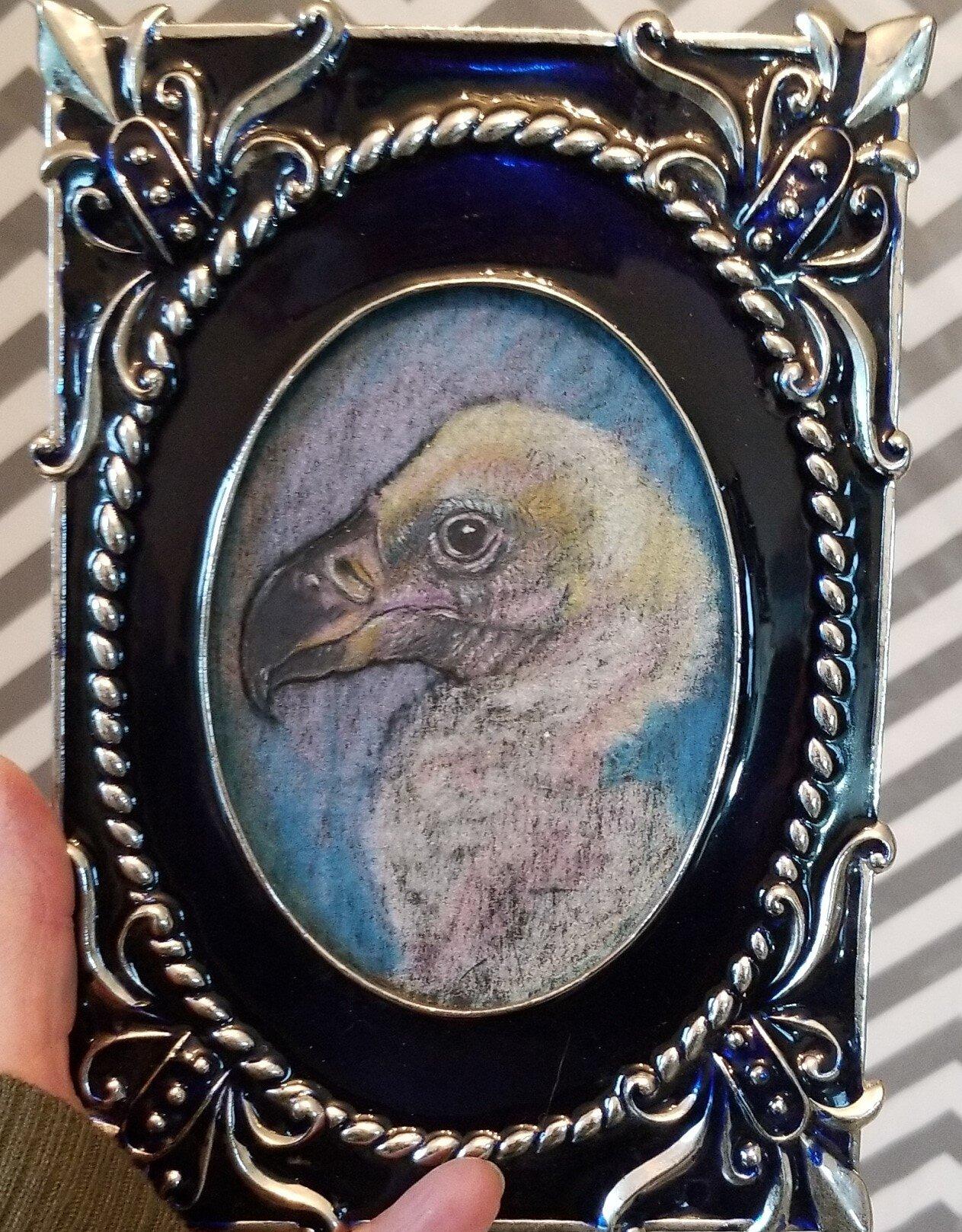 baby condor.jpg