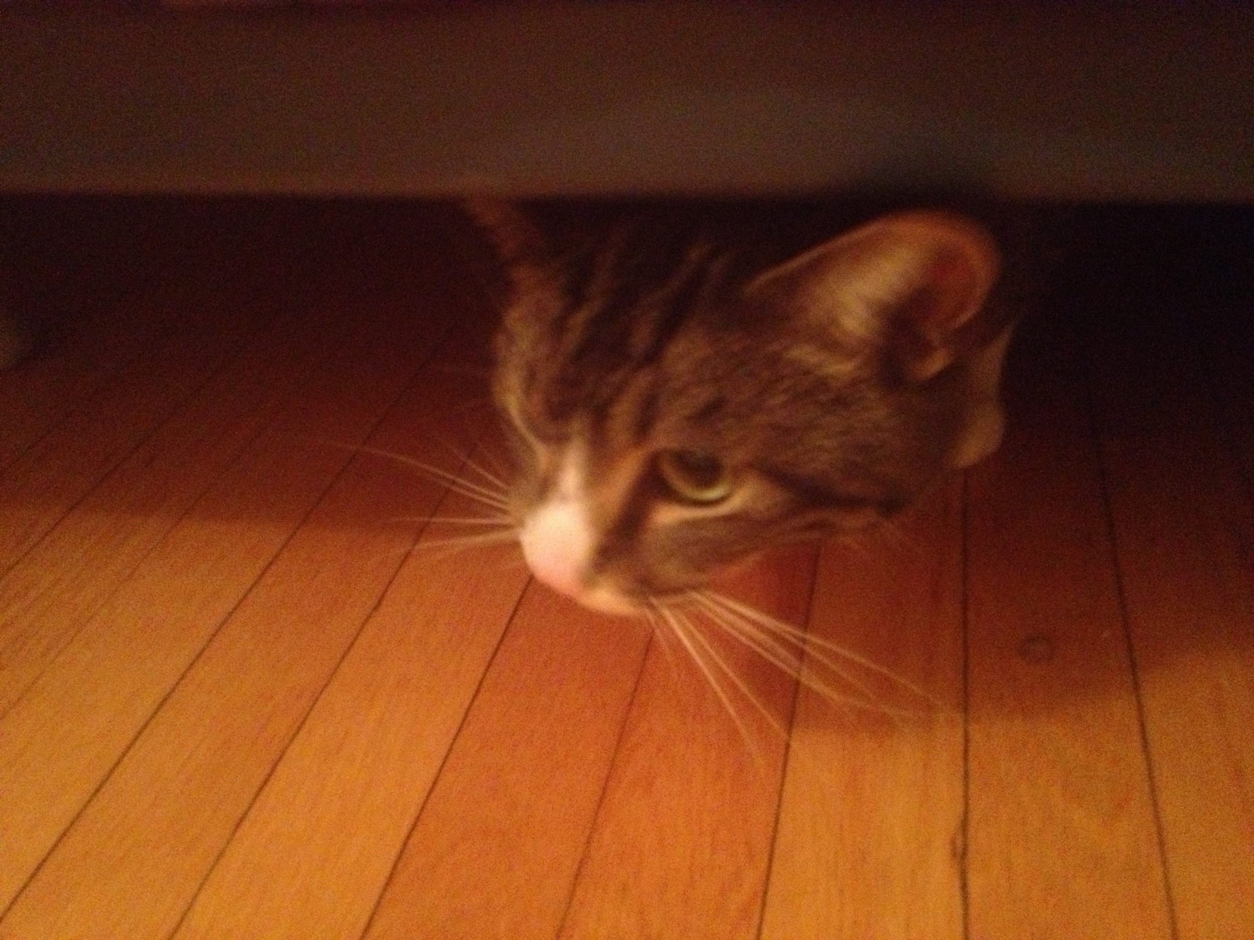 Theo decides it's safe to venture out from under the bed