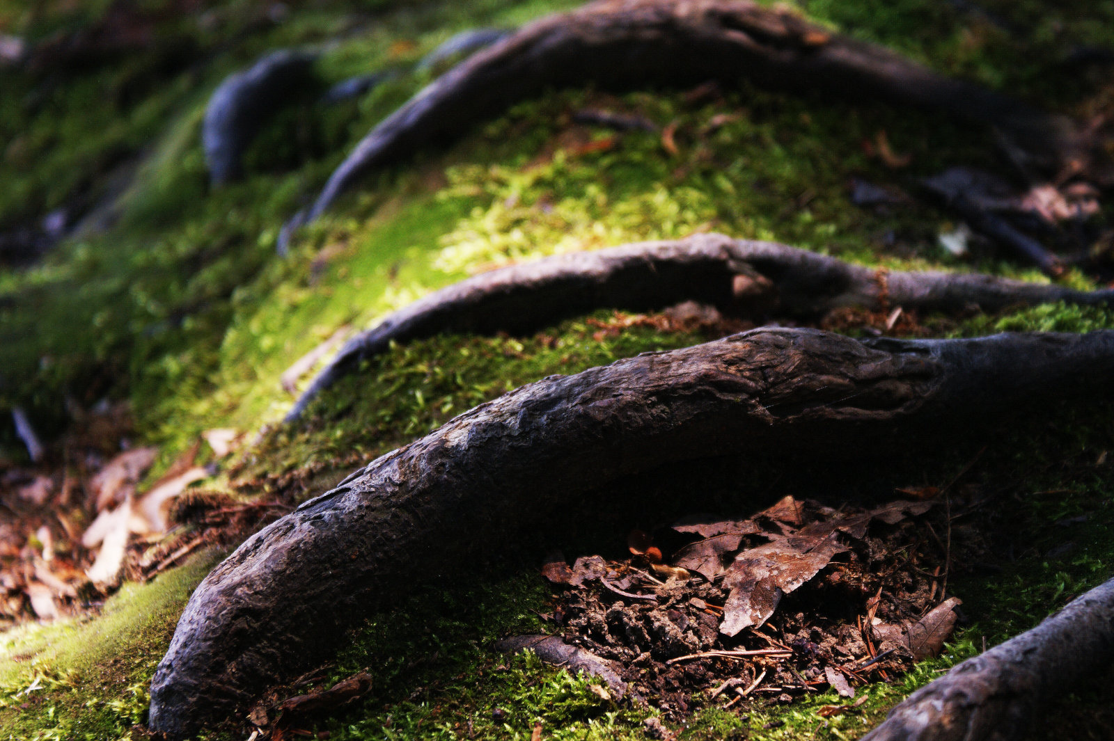 tree_roots_by_evil_iq-d3i3o2c.jpg