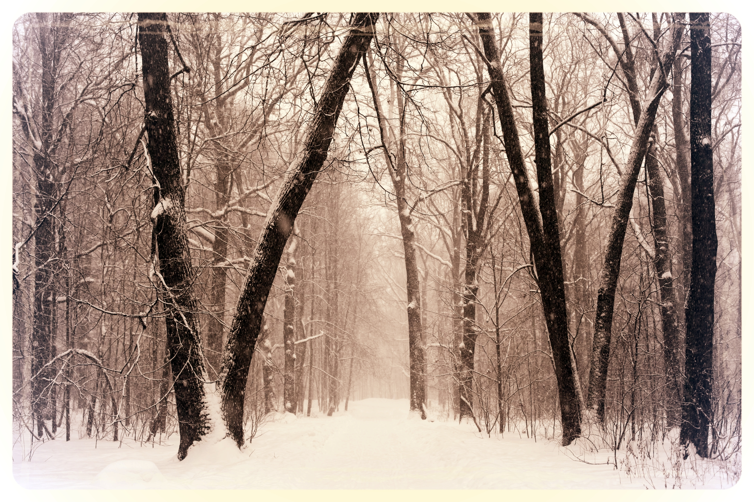 park-winter-russia-city-park-163756.jpeg