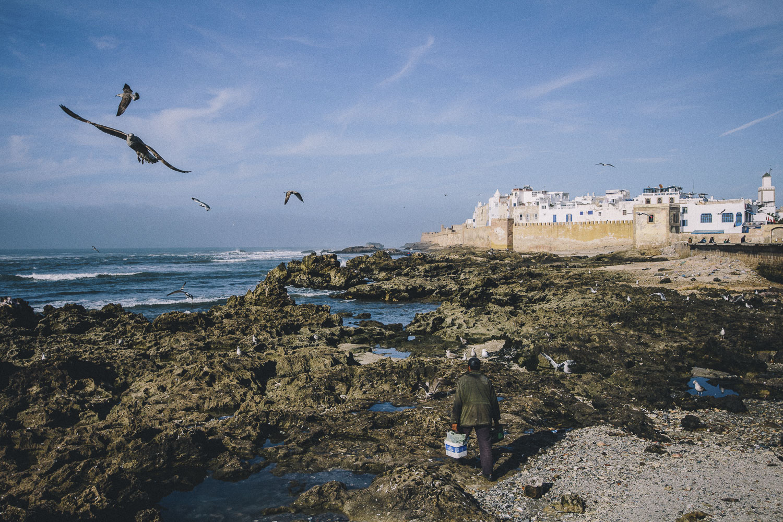 Morocco-Birds.jpg