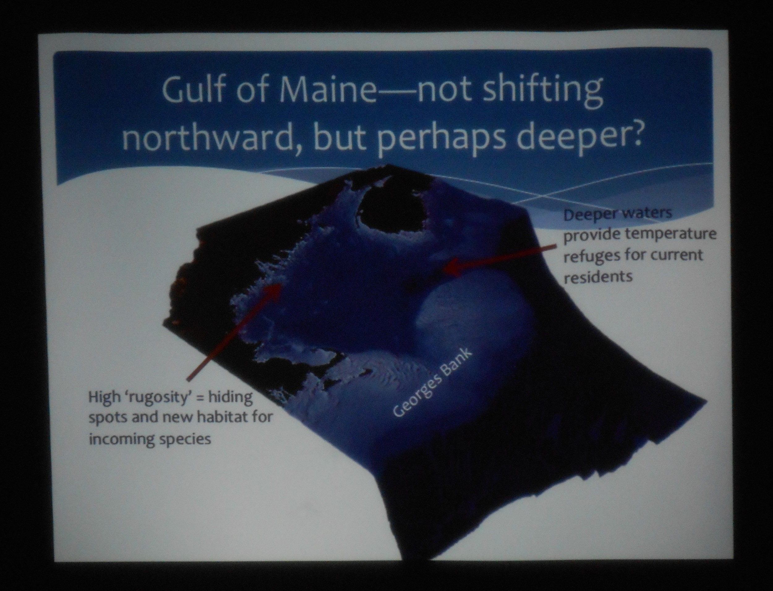 Kristin's slide: in the Gulf of Maine, some fish species are adapting to the reality of warming waters by moving deeper.