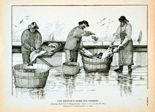 Historical cod fishery. Credit: NOAA.