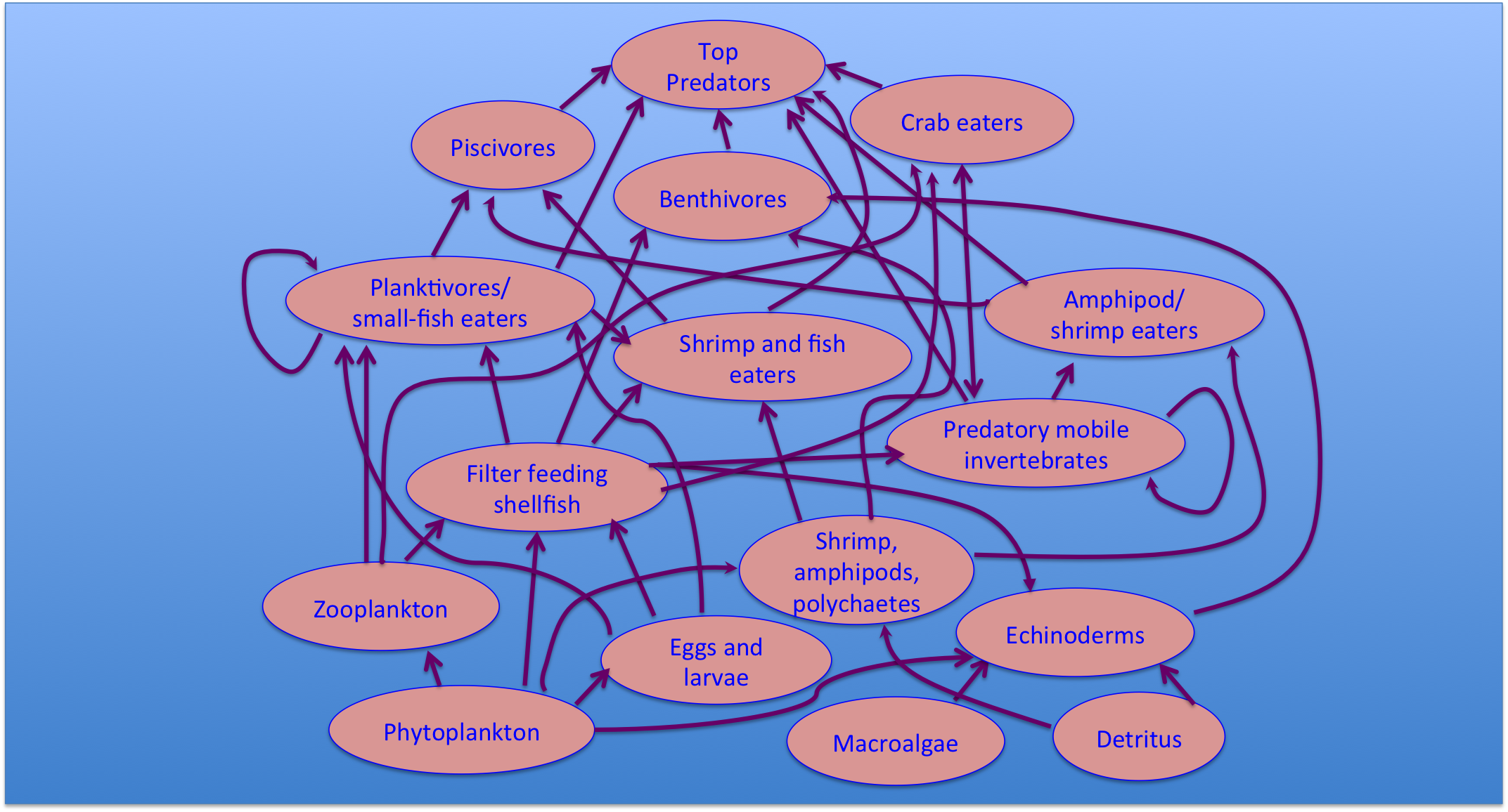 Marine Food webs are extremely complex. even this highly oversimplified one is intricate!