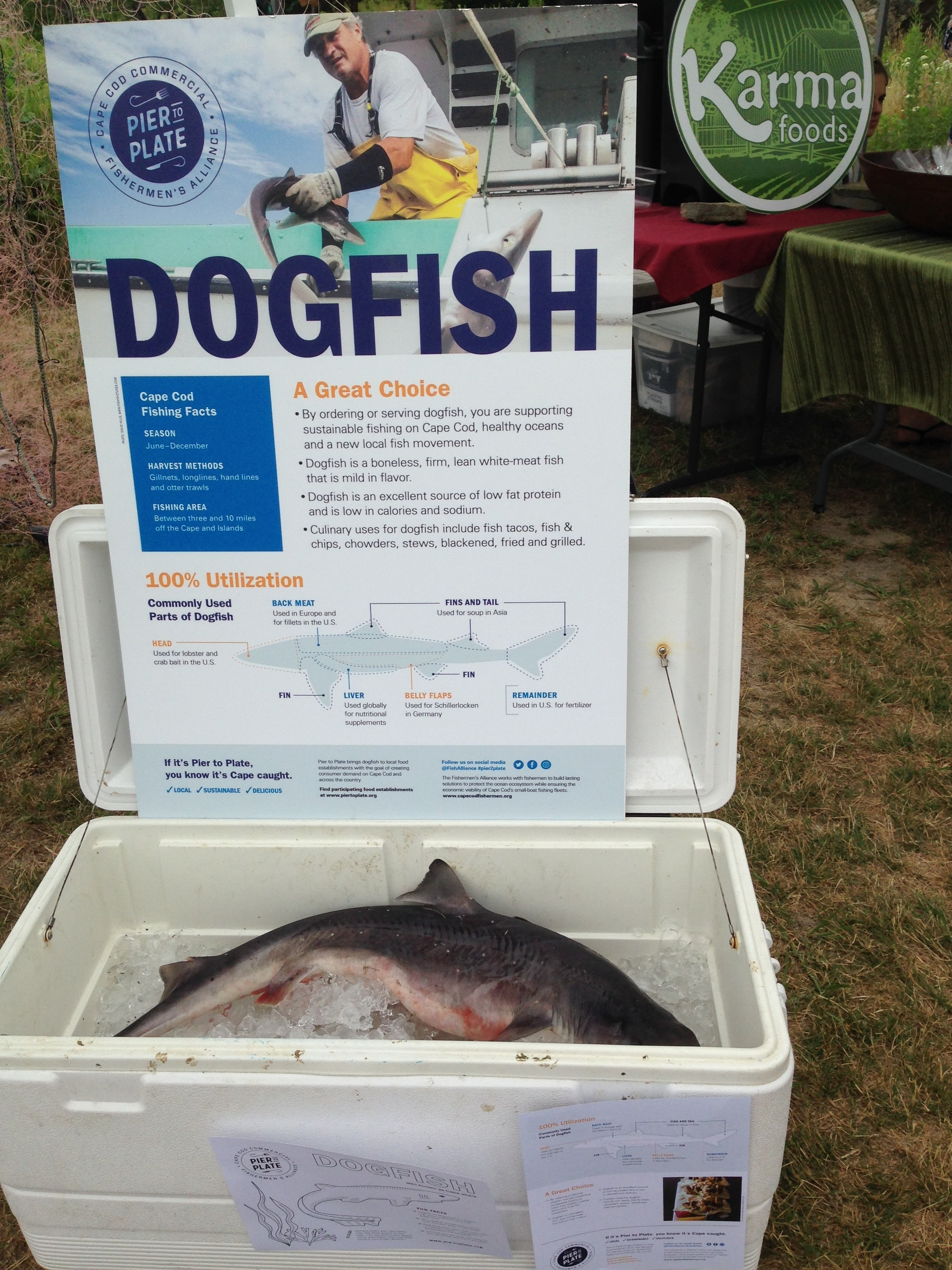 Dogfish display that the Brewster Farmers Market highlighting Pier to Plate