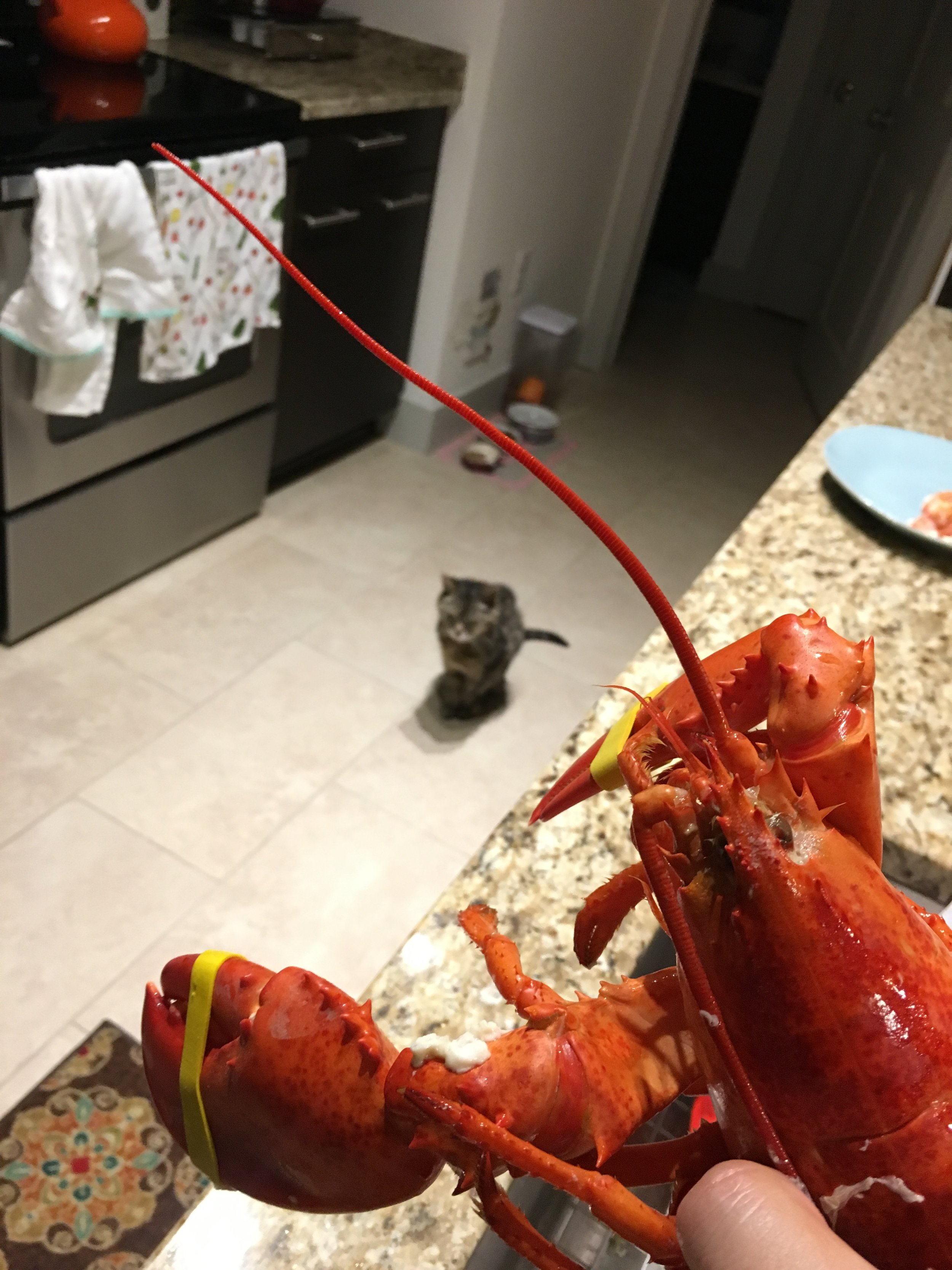 Someone else was also very interested in the lobster!