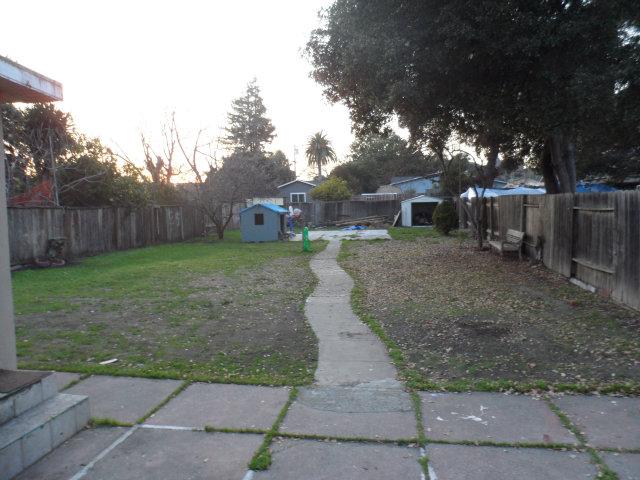 Back-yard.jpg