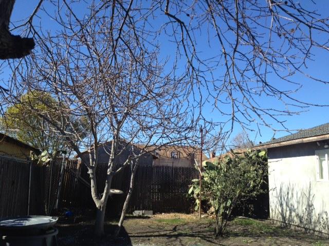 Backyard-view.jpg