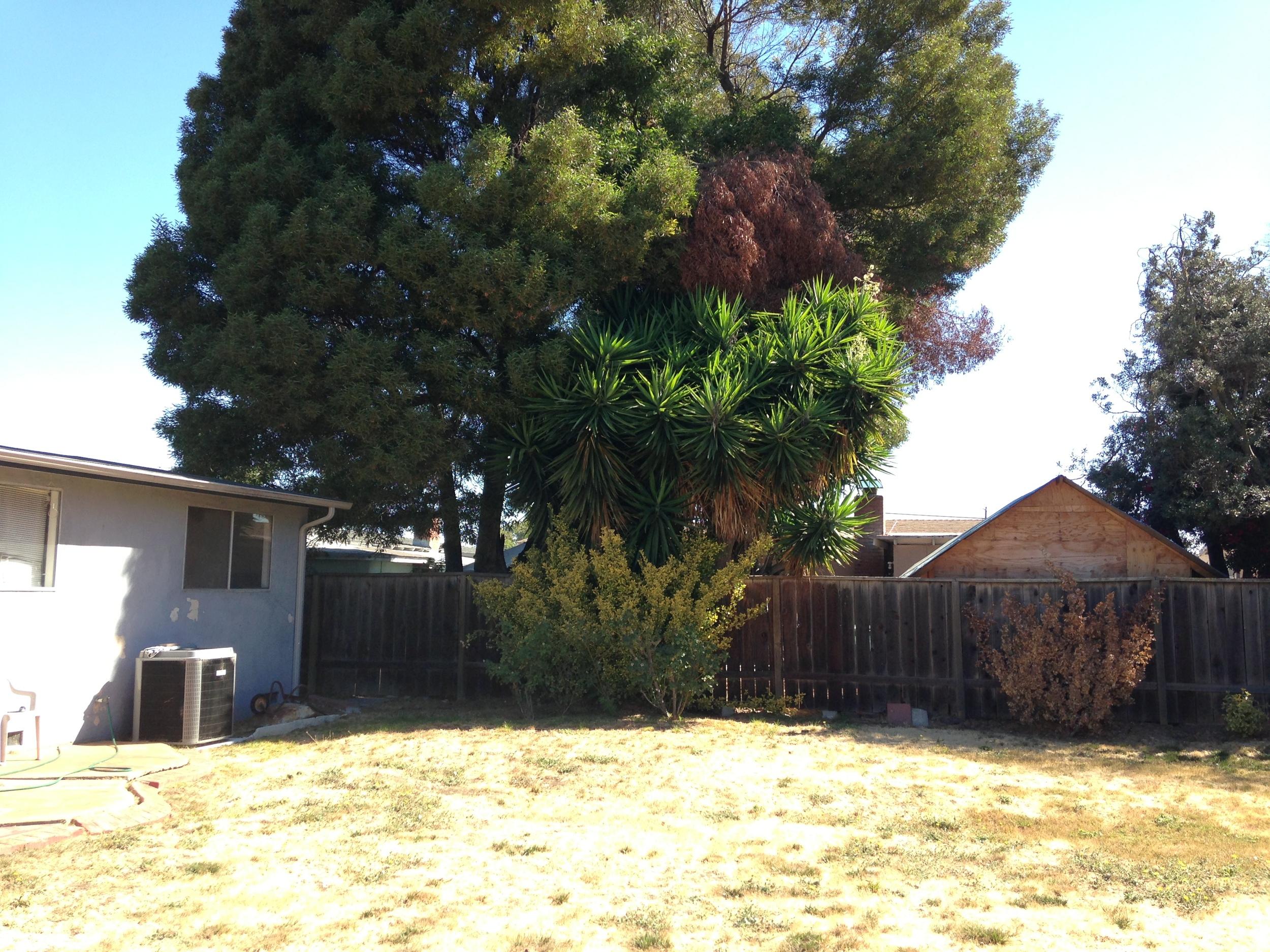 backyard view 2.JPG