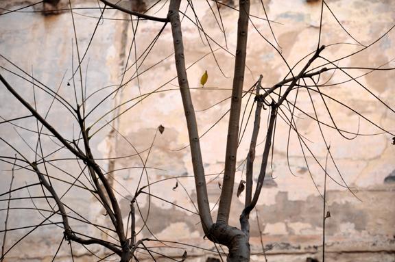 """29. """"Winter Twigs 2011"""""""