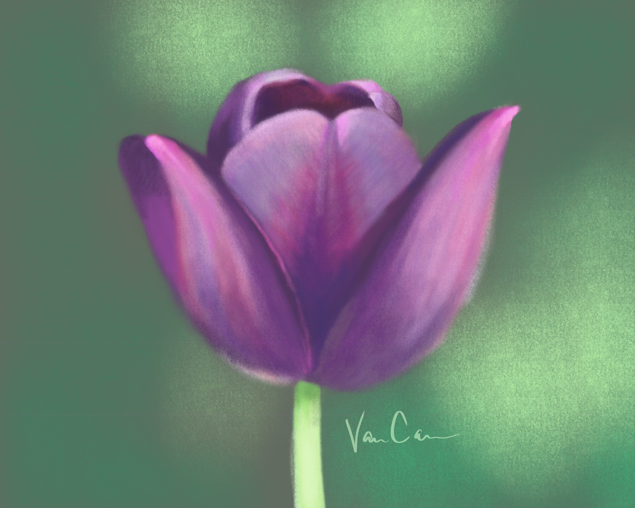 Purple Tulip on Green Background