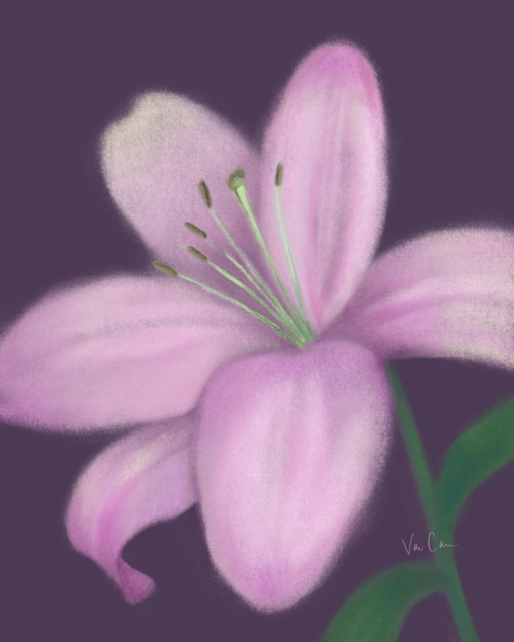 Light Purple Lily on Dark Purple Background