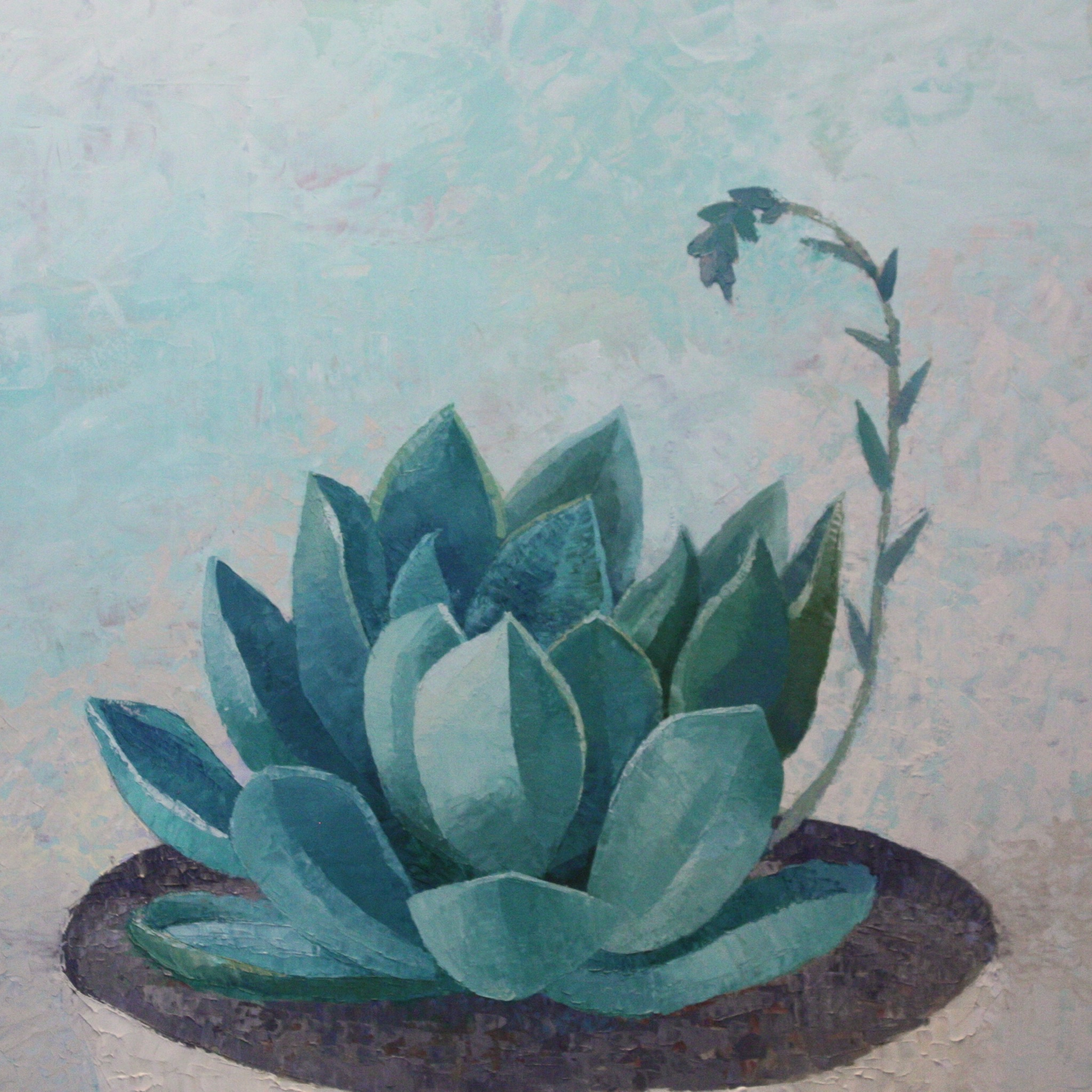 Succulent 7