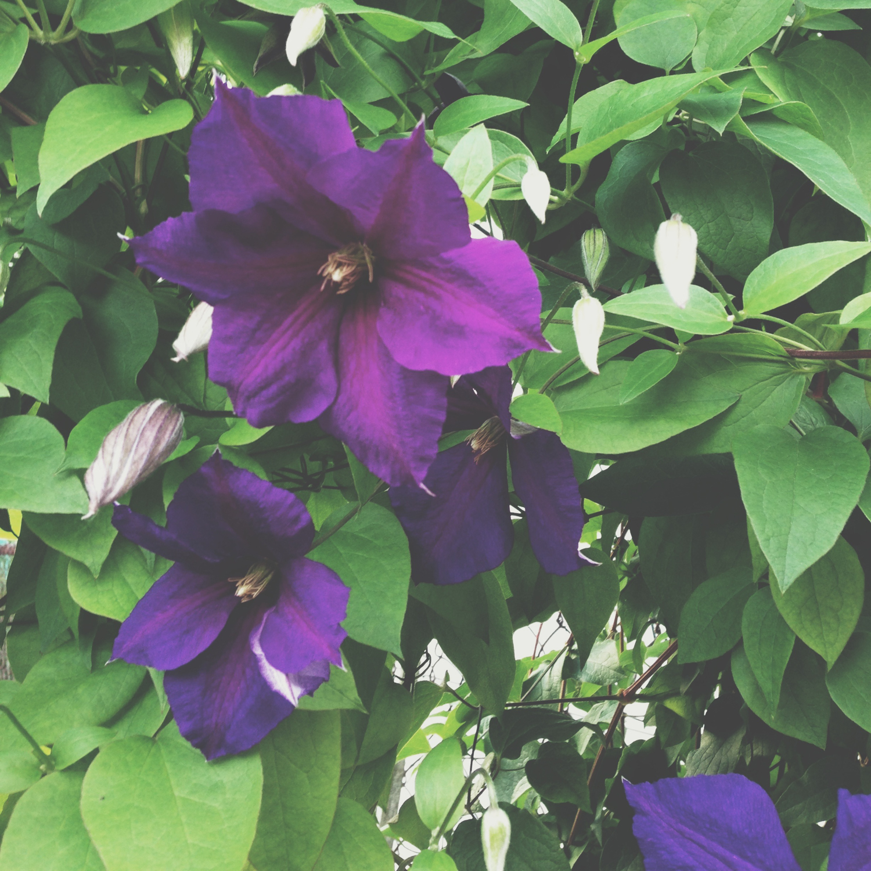 dearborn_purples-0890.jpg
