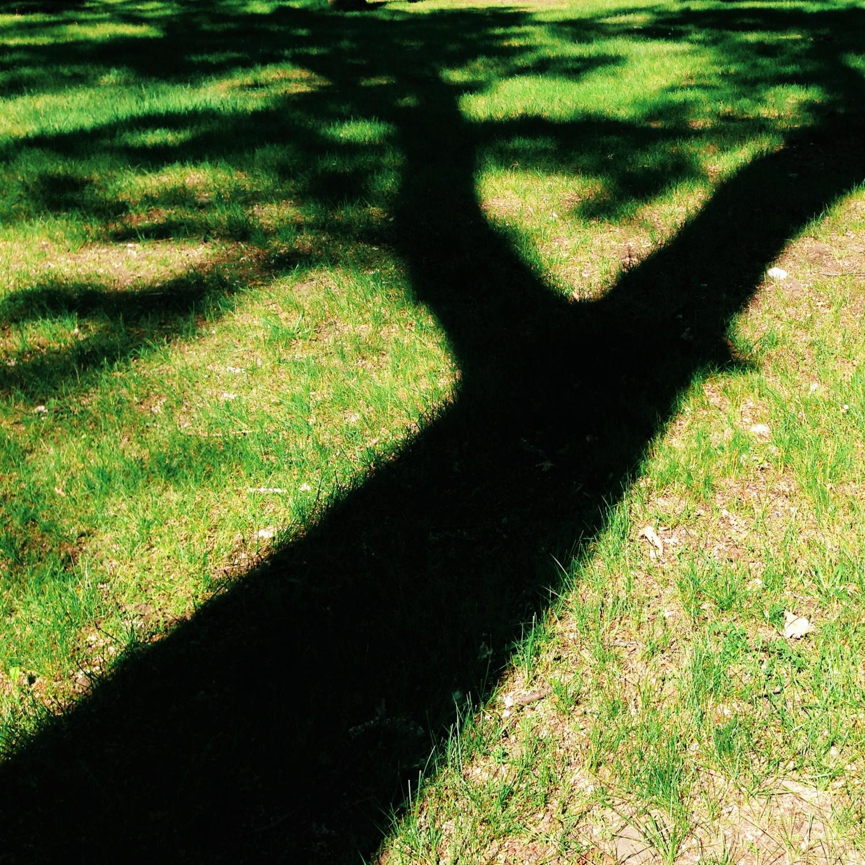 dearborn_shadows-0811.jpg