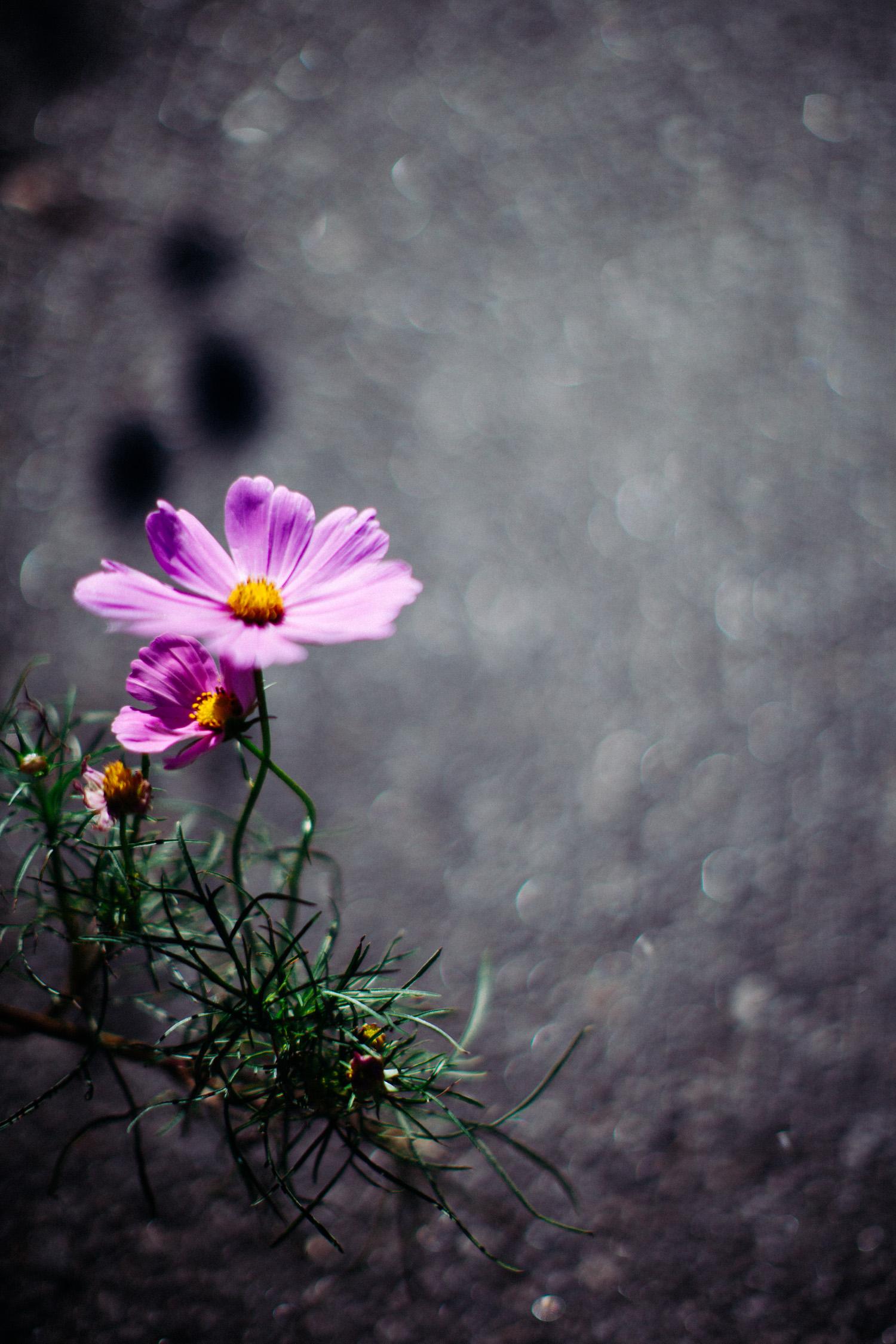 loveisallaround_almostwild-6689.jpg