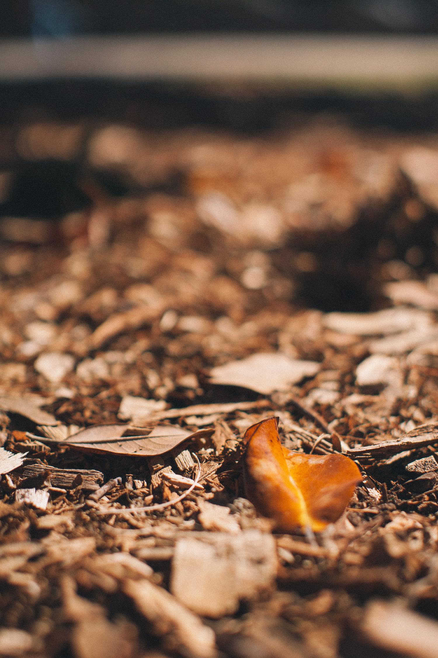 loveisallaround_leaf-6667.jpg