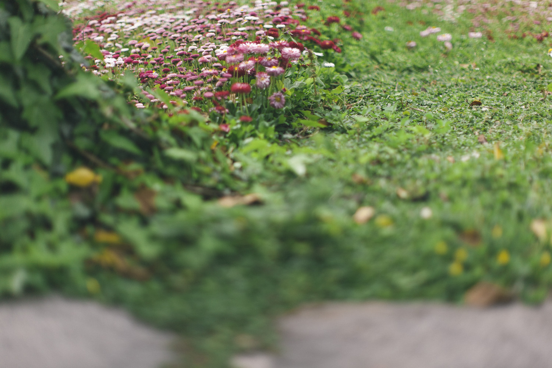meadow-4265.jpg