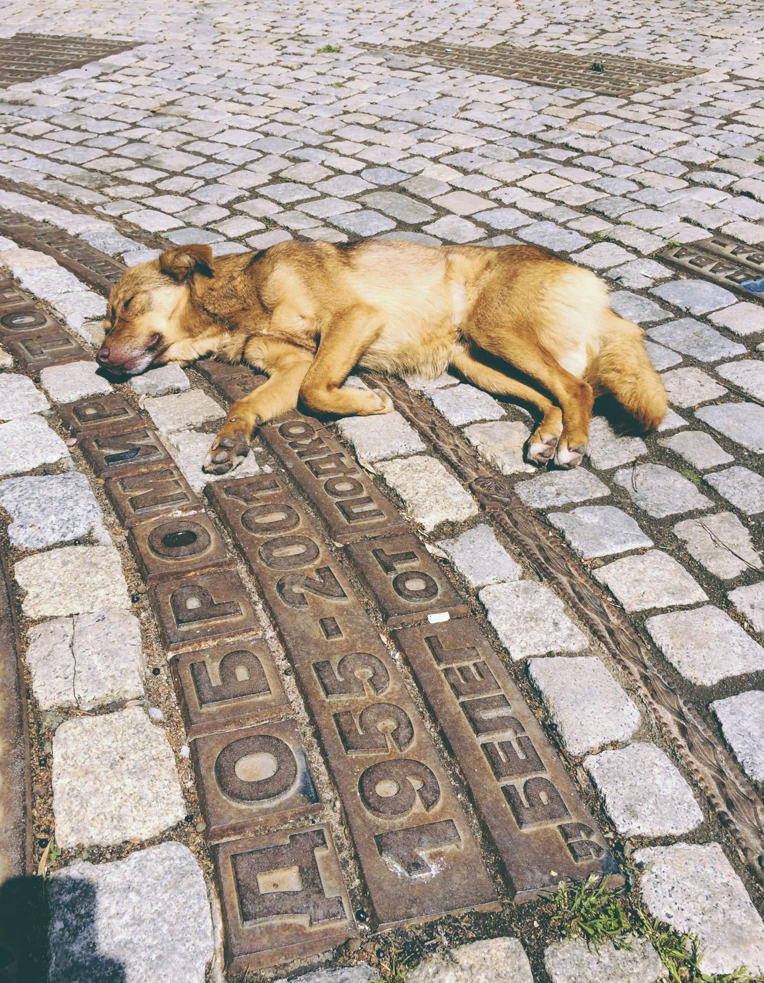 dogslife-2.jpg