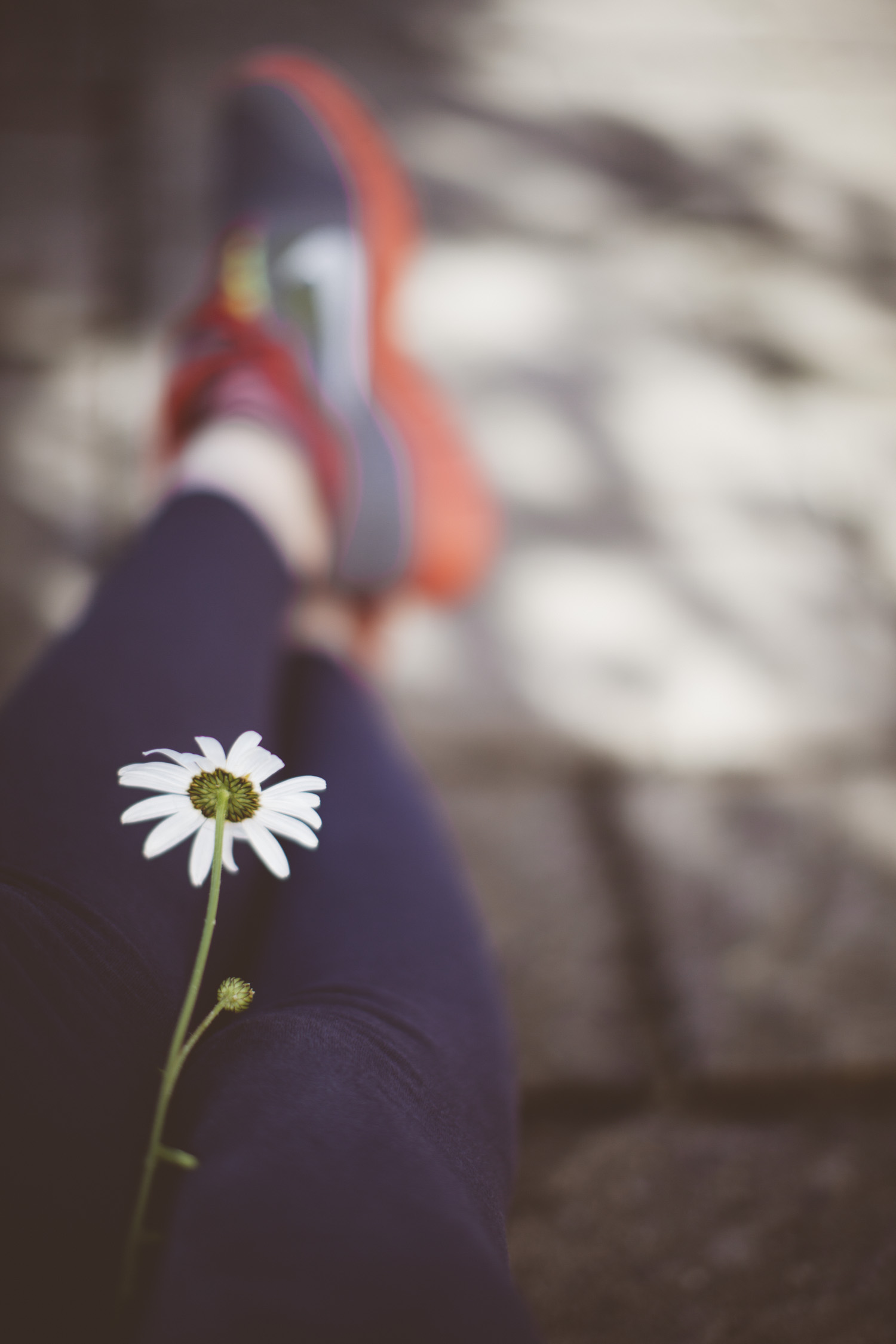 legs-4800.jpg