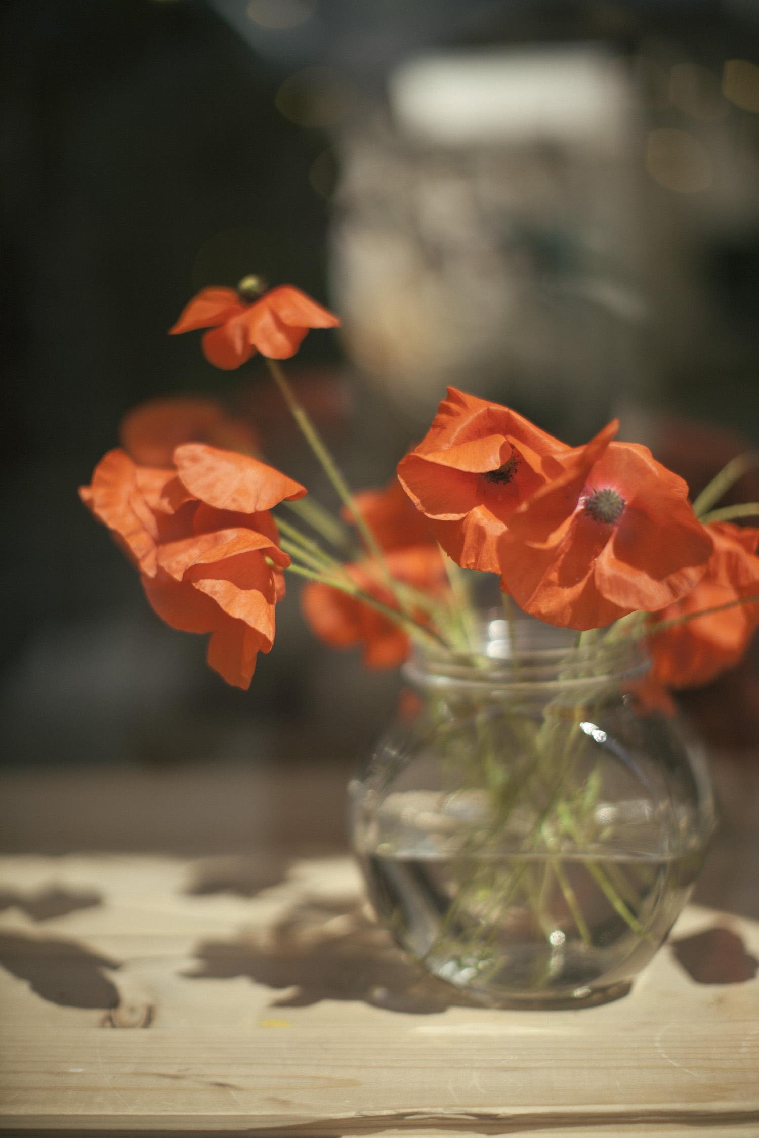 poppy-5023.jpg