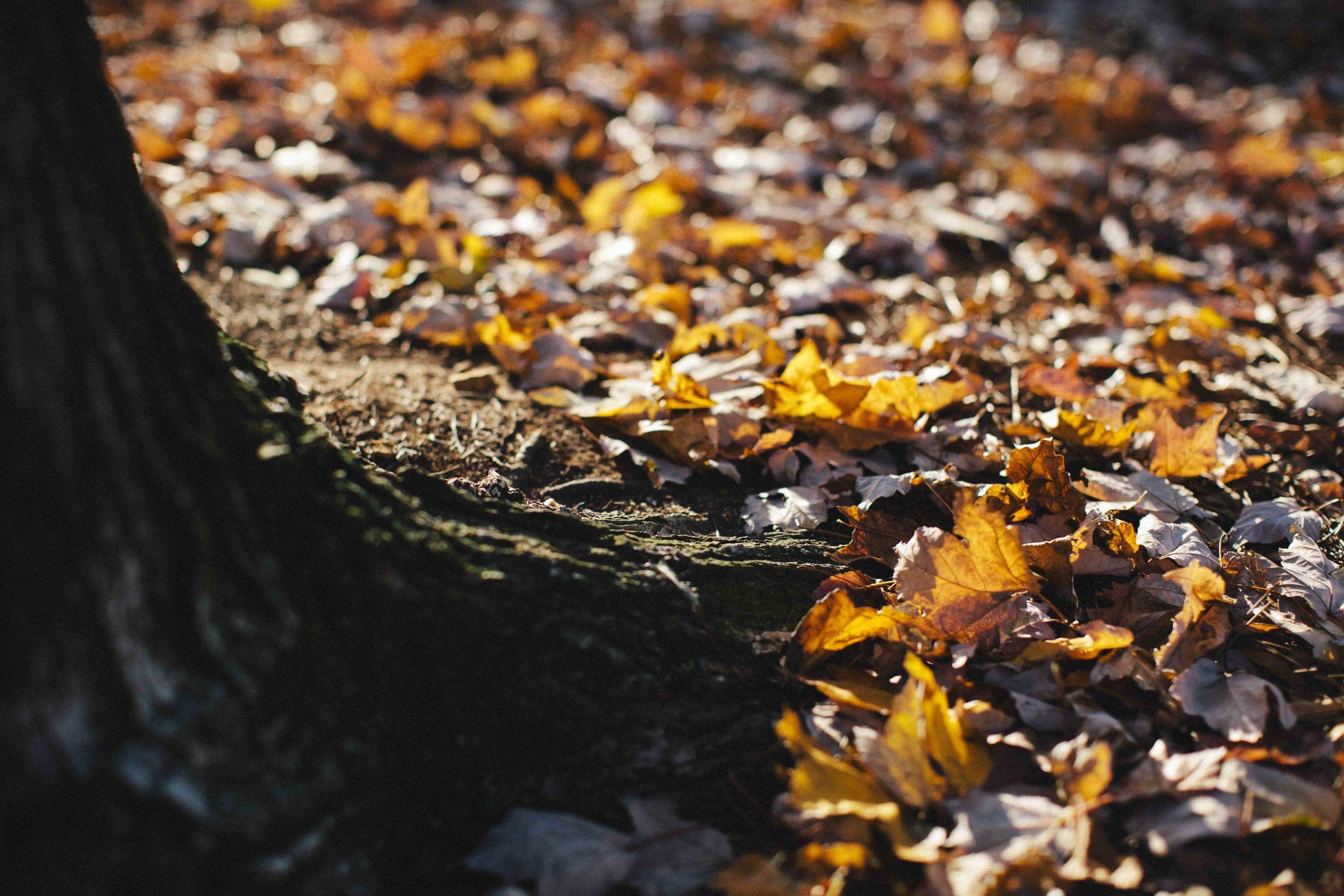 leafy-3426.jpg