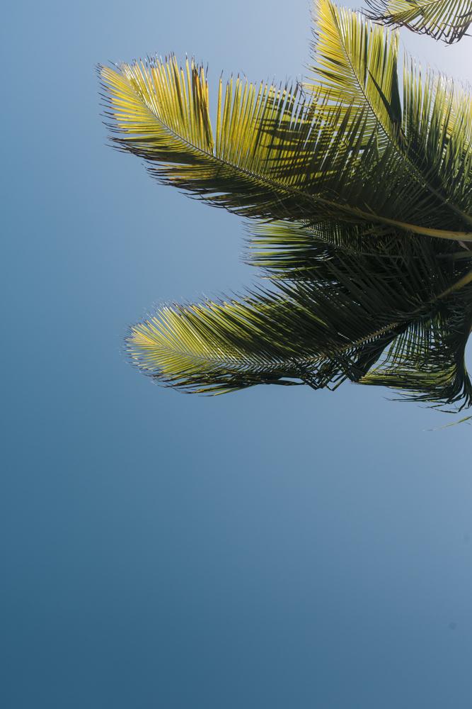 Palm-2277.JPG