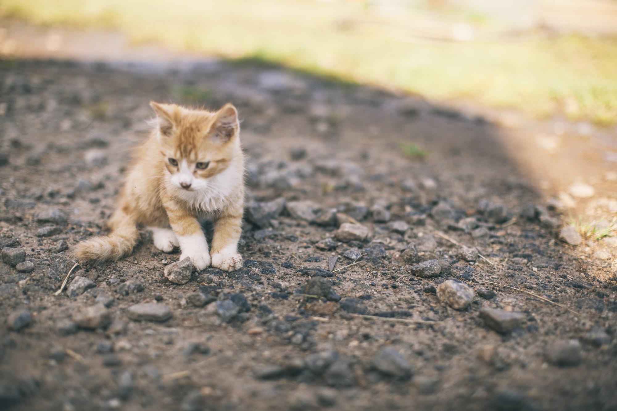 Kitty-5.jpg