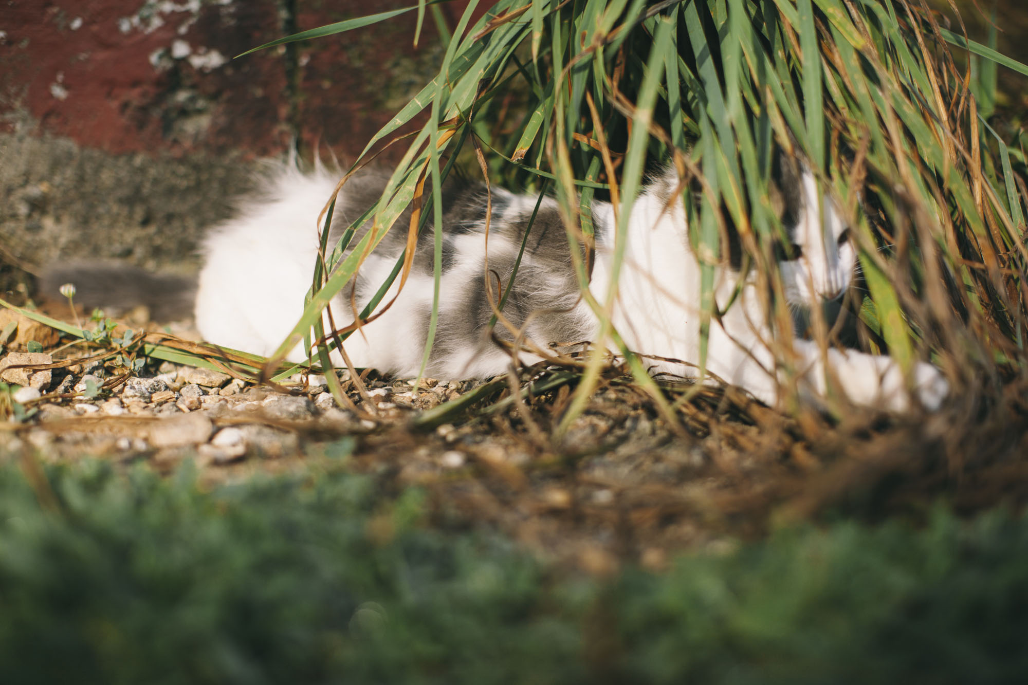 Kitty-6.jpg