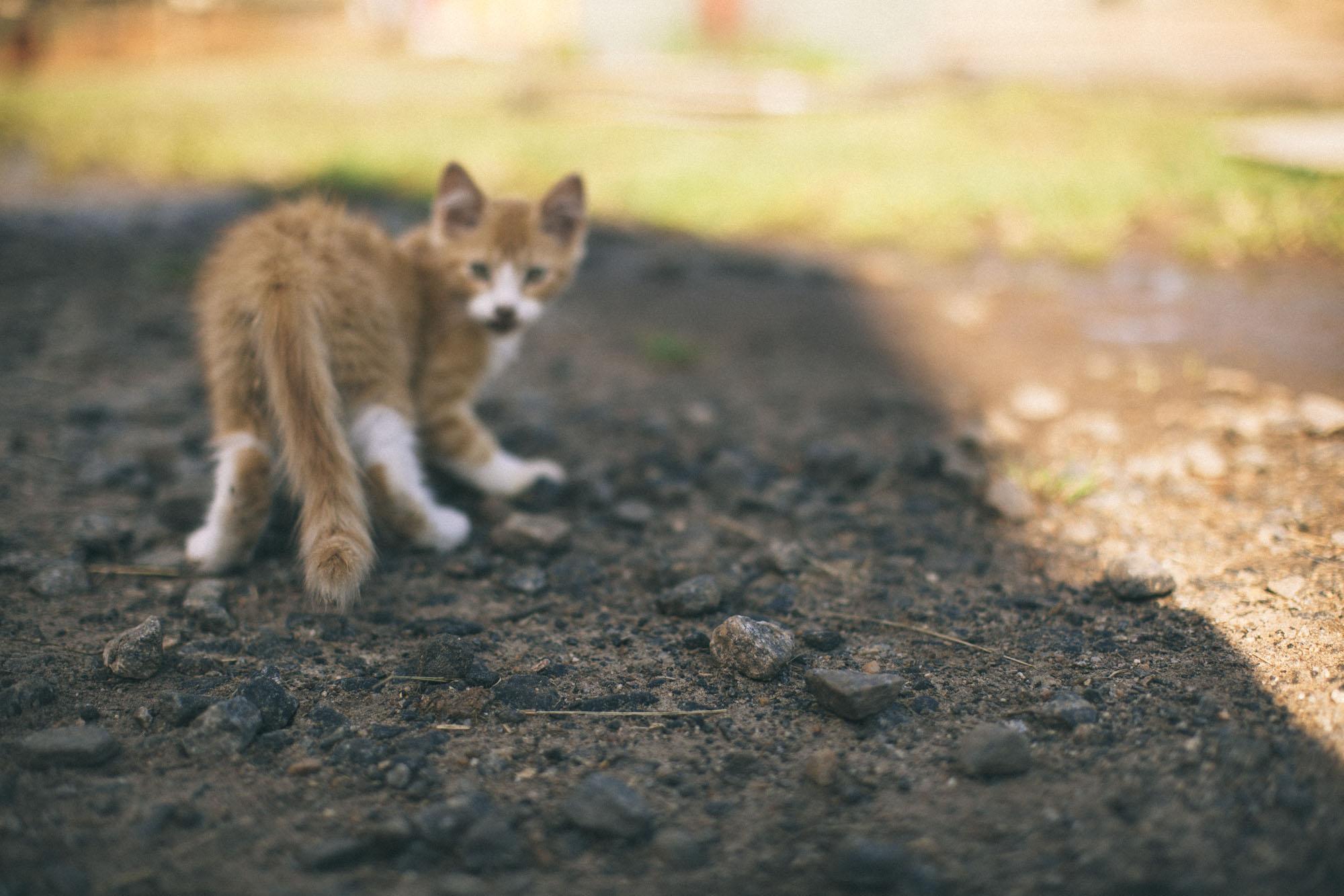 Kitty-8.jpg