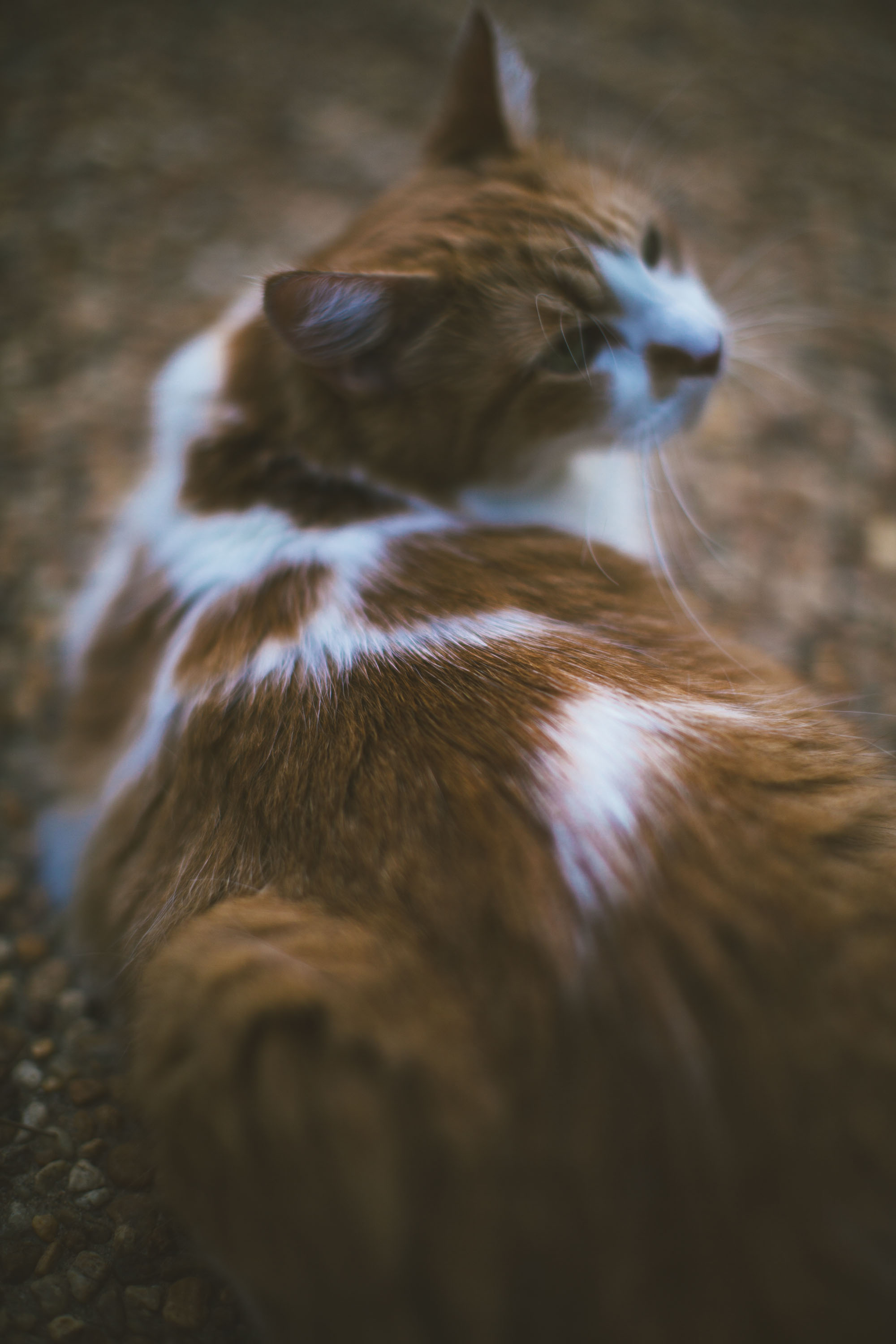 Cat Got Moves-5.jpg