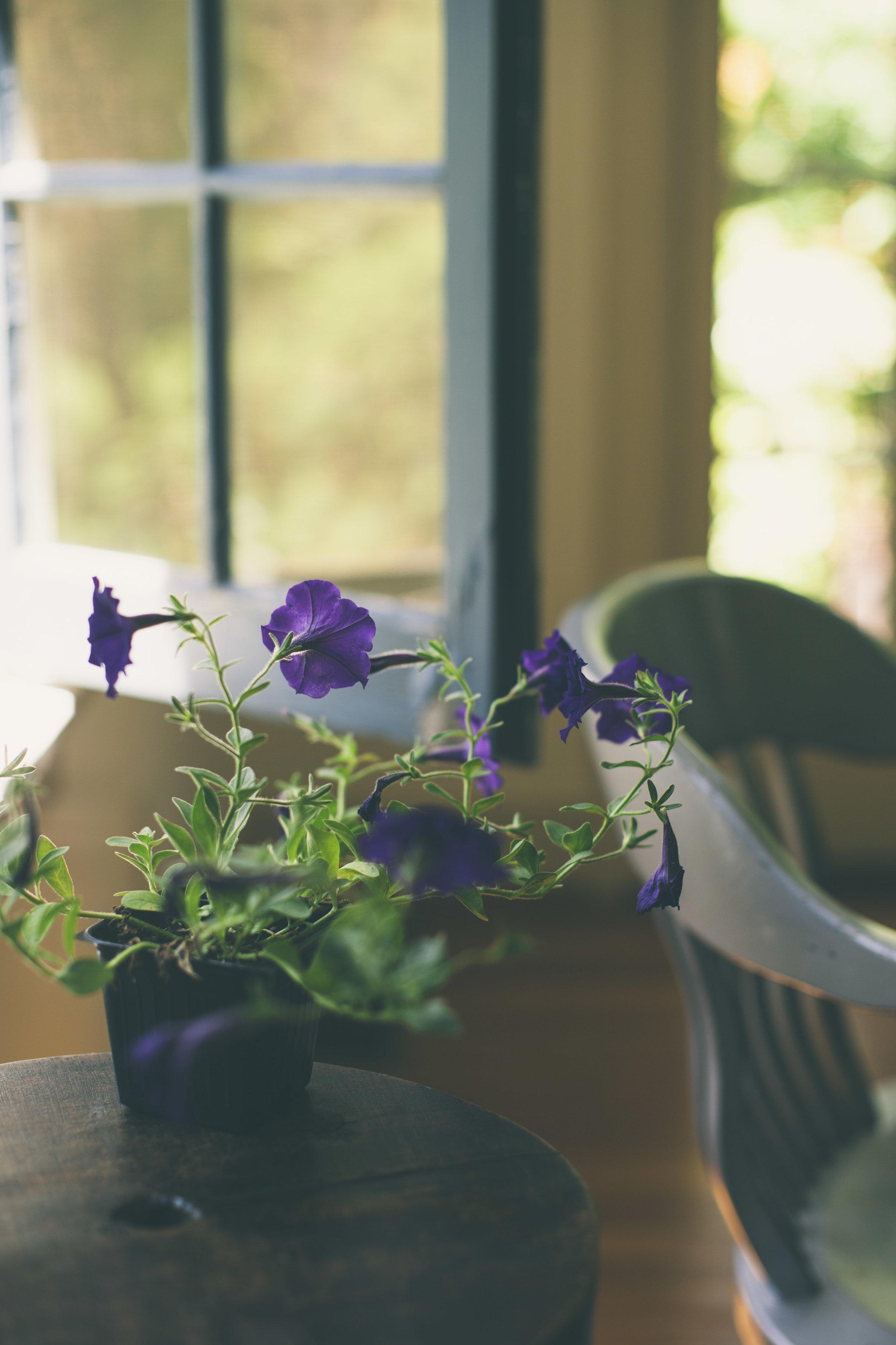 Petunia&Window-9391.jpg