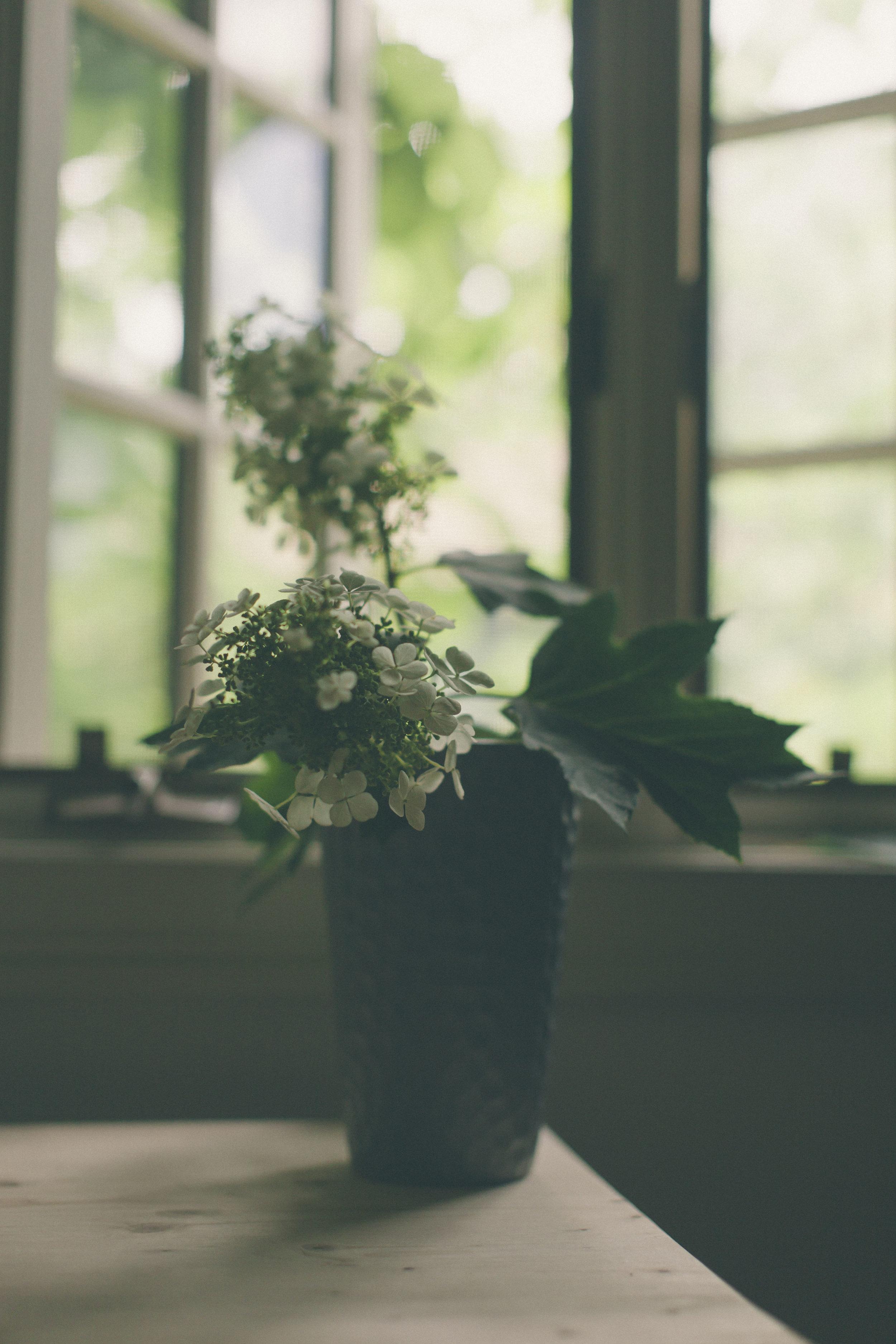 White Bloom-9647.jpg